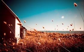 Обои травы, поле, сухие, дом, солнце. фото, яркие. цвета, обработка