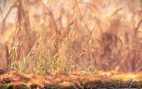 Картинка трава, лучи, свет, мох, Солнце, природа.
