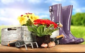 Картинка красная, желтая, примула, primrose, садовый инвентарь, садовые цветочки, garden tools