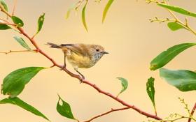 Обои ветка, перья, птичка
