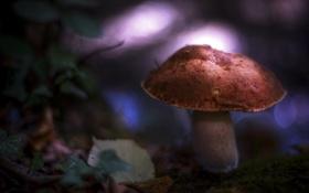 Обои листья, блики, гриб, мох, размытость