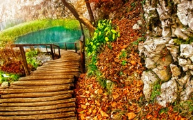 Картинка дорога, листья, озеро