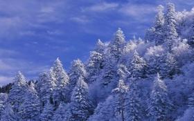 Обои пейзаж, небо, облака, деревья, зима, склон, снег