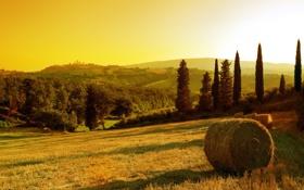 Обои поле, небо, солнце, деревья, закат, стог, сено