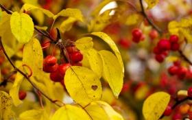 Картинка осень, листья, ягоды