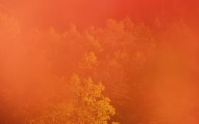Обои осень, лес, деревья, дымка
