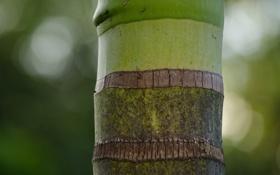 Картинка зелень, полосы, бамбук, ствол
