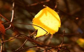 Обои осень, ветки, лист