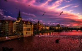 Обои чайки, Прага, Чехия