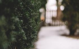 Обои зима, листья, снег, ветки
