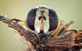 Обои макро, природа, муха