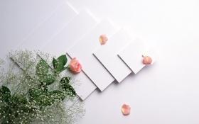 Картинка цветы, роза, лепестки