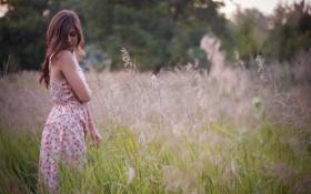 Картинка поле, девушка, лето