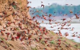 Картинка полет, птицы, природа, краски, стая