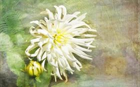 Картинка цветок, текстура, стиль