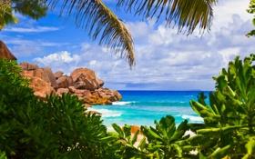 Обои тропики, небо, ocean, sand, sea, пляж, palm