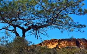 Картинка горы, небо, дерево