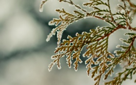 Обои зима, снег, ветка, hombre, winter2k10