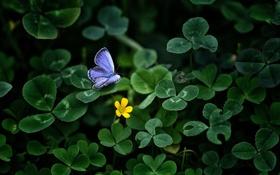 Обои цветок, трава, желтый, бабочка, голубая