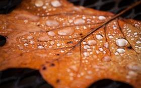 Обои осень, капли, лист, роса, сухой