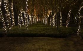 Обои деревья, ночь, праздник, атмосфера, красиво, photographer, украшенные