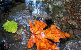 Обои осень, листья, вода, камни, дно