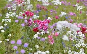 Картинка поле, трава, лепестки, луг
