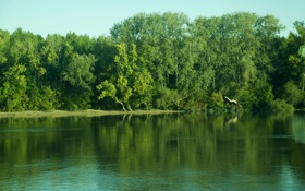 Обои лес, река, небо, деревья