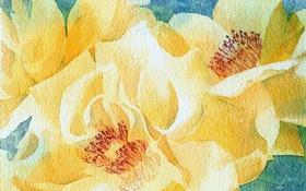 Обои цветы, фон, картина