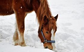 Картинка зима, снег, лошадь