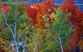 Обои листья, June Lake, Калифорния, деревья, осень, озеро, США
