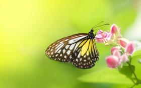 Обои цветок, фон, макро, бабочка