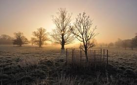 Картинка поле, деревья, туман, утро