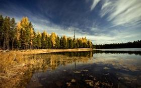 Картинка осень, лес, небо, облака, деревья, пейзаж, природа