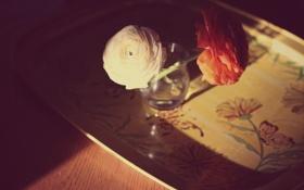 Картинка цветы, розы, лепестки, белая