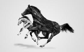 Картинка белый, фон, обои, графика, минимализм, лошади, арт