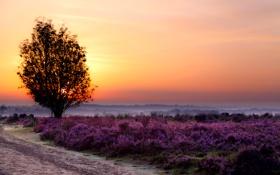 Картинка закат, туман, цветы, природа, дерево