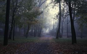 Обои деревья, туман, парк, лавки