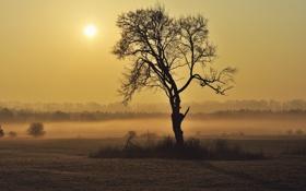 Обои солнце, туман, горизонт, sunshine, frog, tree, sun