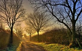 Обои дорога, осень, свет, пейзаж, туман, утро