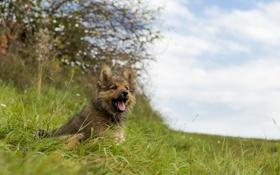 Картинка фон, взгляд, собака