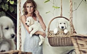 Обои собаки, девушка, платье, щенки, блондинка, белые, корзины