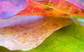 Обои природа, листья, обои, лист, цвет