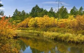 Обои осень, небо, вода, облака, лесЮ река