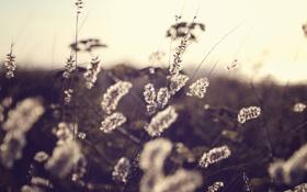 Обои осень, фото, поле, сухие, обои, Природа, растения
