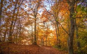 Обои осень, лес, листья, деревья, ветви, дорожка, солнечный свет
