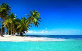 Обои море, пляж, тропики, пальмы