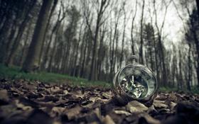 Картинка листья, природа, часы
