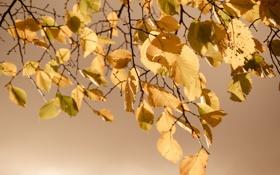 Обои осень, листья, природа, nature, autumn, leaves, 2560x1600