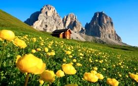 Обои небо, горы, склон, домик, цветы